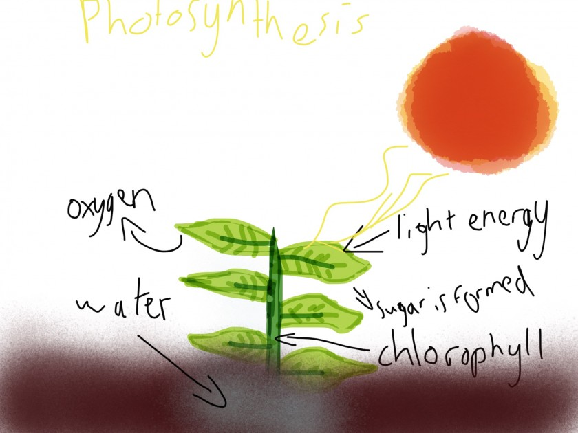 Photosynthesis diagrambucklands beach primary school this is my photosynthesis diagram explaining the process of photosynthesis ccuart Images