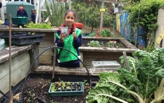 Garden To Table seedlings